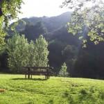 Wildwood Canyon – Relax & Unwind