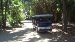 VIP Tour Juraassic Park