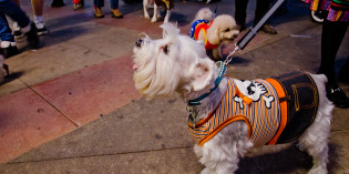 Pics From 2013 Dog Parade (Halloween in Burbank)